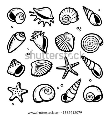 Seashells set. Collection seashells icons. Vector Stockfoto ©