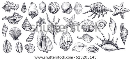seashells vector set hand