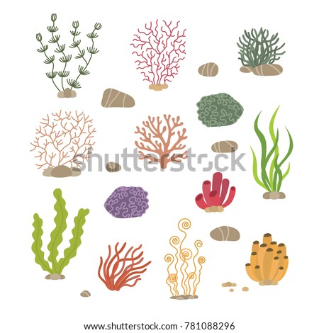 seaweed  corals and stones