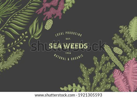 Seaweed design template. Hand drawn vector seaweeds illustration. Engraved style sea food banner. Retro sea plants background