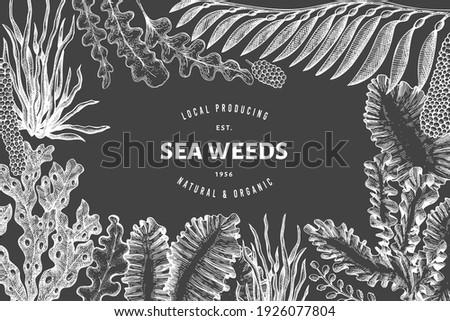 Seaweed design template. Hand drawn vector seaweeds illustration on chalk board. Retro style sea food banner. Vintage sea plants background