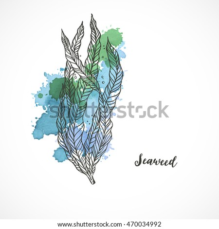 seaweed giant kelp  macrocystis