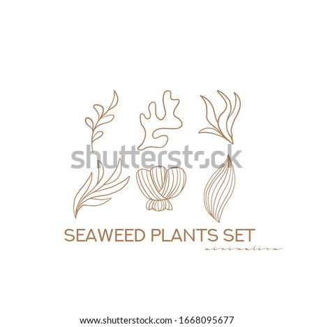 Seaweed plants set. Vector underwater nature design elements. Illustration of marine reef flora outline seaweed and corals isolated on white background. Minimalist Design elements