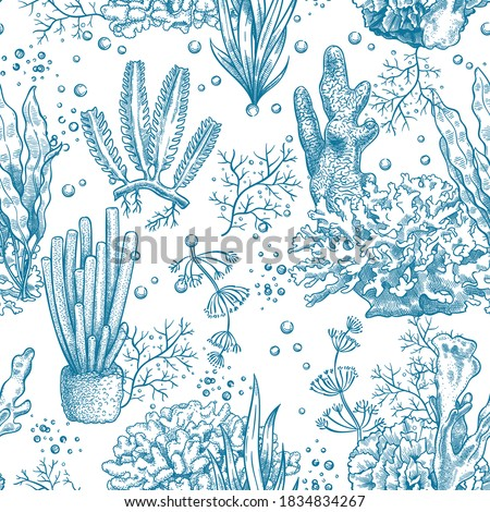 Seaweed seamless pattern. Reef aquatic plants and corals, underwater sea and aquarium life nautical japanese, chinese sketch vector texture. Illustration laminaria botanical seamless nautical pattern