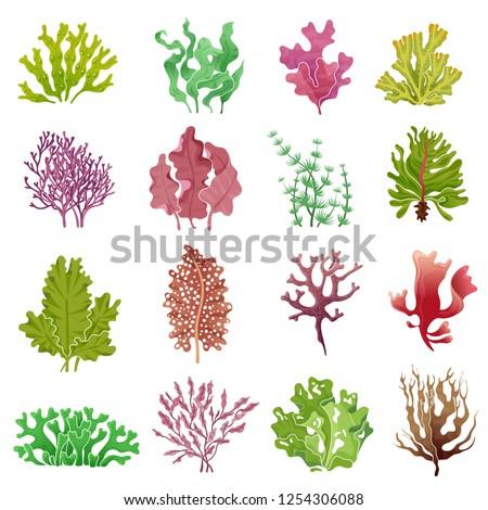 Seaweed set. Sea plants, ocean algae and aquarium kelp. Underwater seaweeds vector isolated set Сток-фото ©
