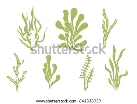 Seaweed vector silhouette set