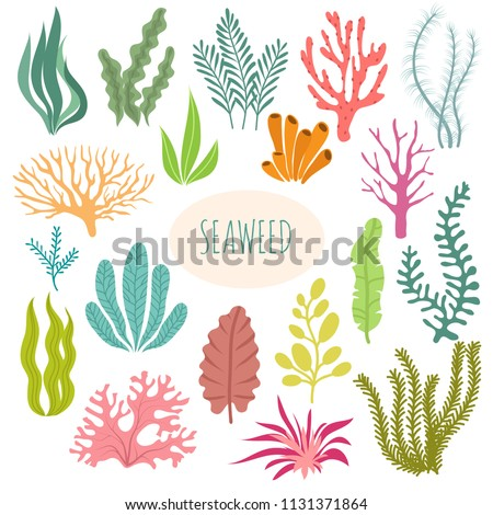 Seaweeds. Aquarium plants, underwater planting. Vector seaweed silhouette isolated set. Illustration of aquatic plant, nature wildlife