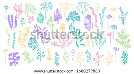 Seaweeds coral reef underwater plans vector collection. Aquarium, ocean, marine algae water plants, corals isolated on white. Seaweeds polyps silhouettes set. Pastel branches, twigs and flowers.
