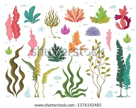 Seaweeds. Sea underwater plants, ocean coral reef and aquatic kelp, hand drawn marine flora set. Vector seaweed cartoon sketch aquarium decor