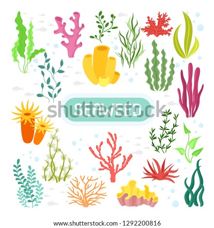 Seaweeds. Vector illustration of seaweeds, planting, marine algae and ocean corals silhouettes. Underwater plants for aquarium decor. Isolated set on white background. Nature seaweed marine.