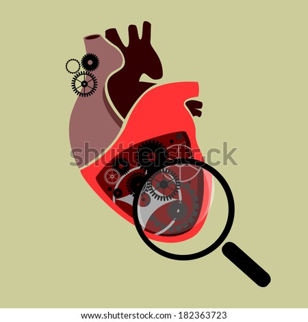 section of a human heart with
