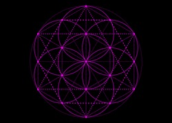 Seed of life symbol Sacred Geometry. Pink mystic mandala of alchemy esoteric, Flower of Life. Vector neon purple effect isolated on black background