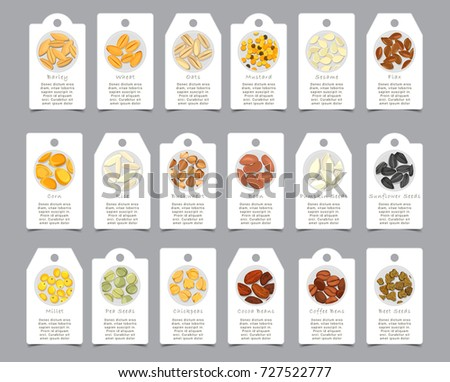 Seeds of seasonings on paper cards. Coffee and beet beams, sign for pea and banner for wheat, badge for barley and oat, wheat and mustard, sesame. Nutrition and food, appetizer theme