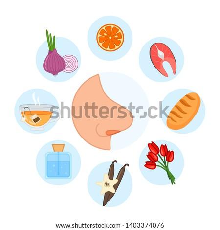 sense organs. Smell. Vector illustration.
