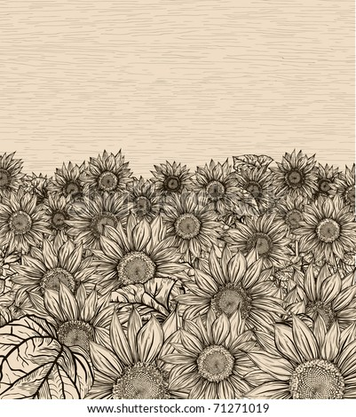 Sepia sunflowers field