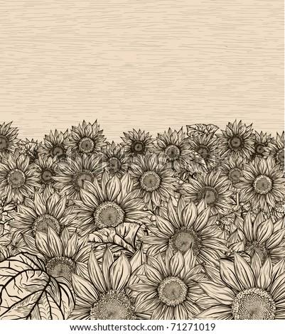 Sepia sunflowers field