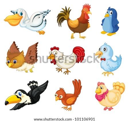 series of bird illustrations on