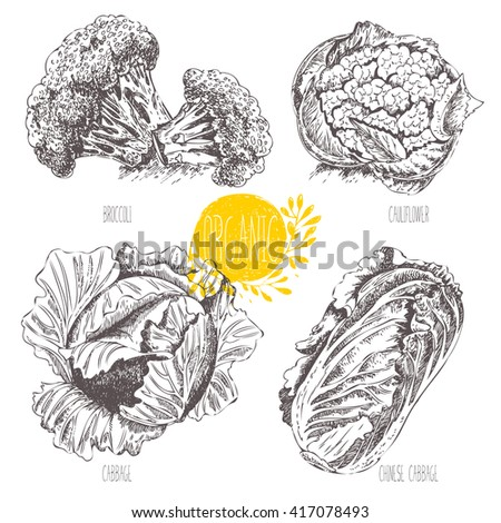 series   vector fruit
