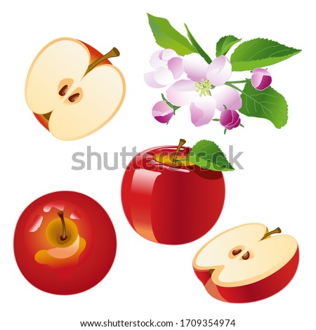 Set apple, red apples, apple slices, apple blossom. Isolate Spring flowers and red fruits apples. Vector illustration on a white background.