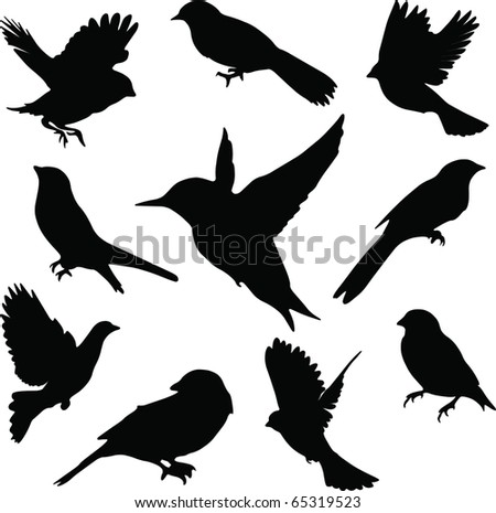 Set Birds.Vector