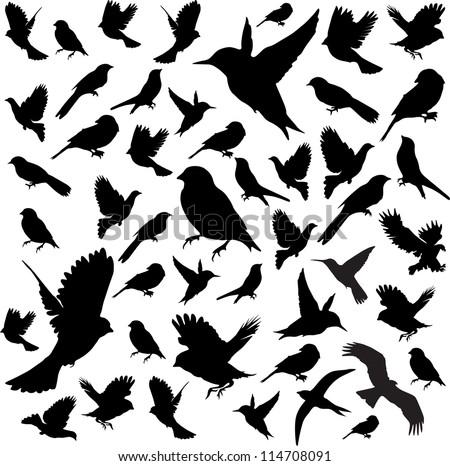 Set Birds.Vector illustration