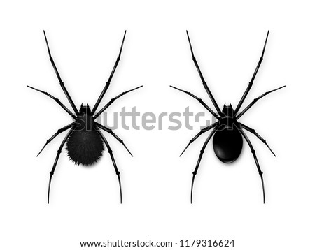 Set Black spider isolated on white background. Realistic vector illustration of black spider.