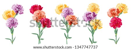 set bouquets of carnation