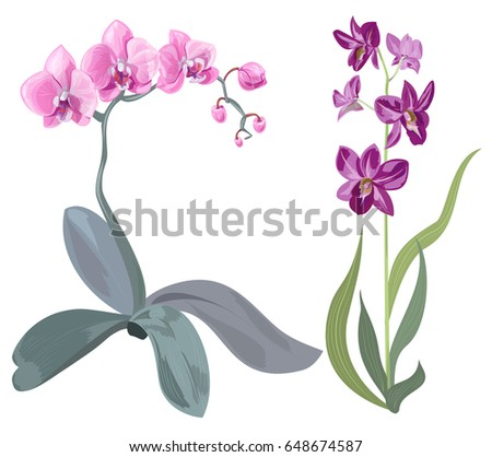 Purple flower background download free vector art stock graphics set branches orchid phalaenopsis dendrobium pink purple flowers tropical plants mightylinksfo Choice Image