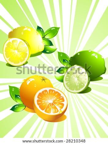 Set citrus fruit. Vector