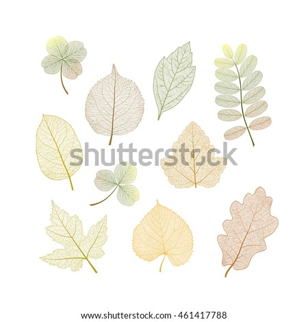set colored autumn leaves on