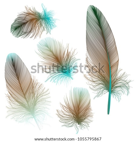 set colored feathers. vector...
