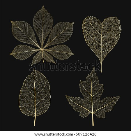 set colored gold leaves vector