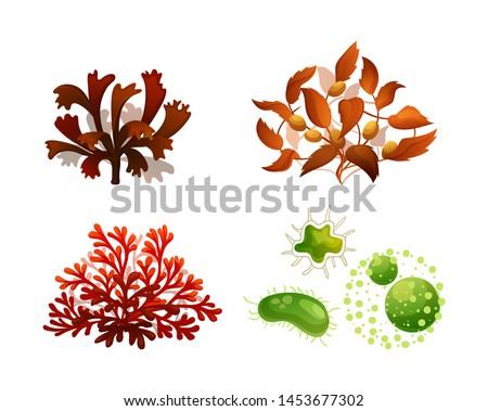 Set coral seaweed underwater marine flora. Marine aquarium flora differents seaweeds red algae, brown algae Sargassum, phytoplankton tropical sea plant elements silhouette vector illustration Сток-фото ©