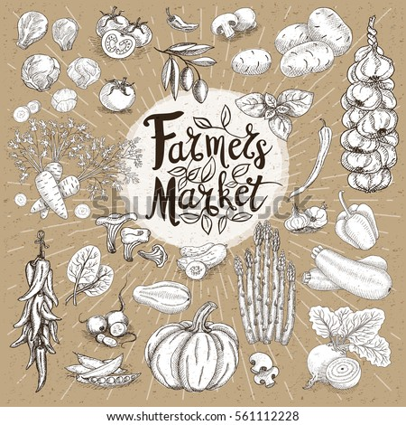 Set design template food, spice, sketch style, cardboard. Vegetables. Farmer market. Lettering, calligraphy logo. Hand drawn vector illustration