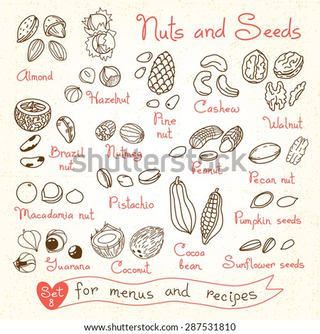 set drawings of nuts and seeds