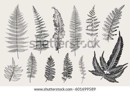 set ferns 12 leaves vintage