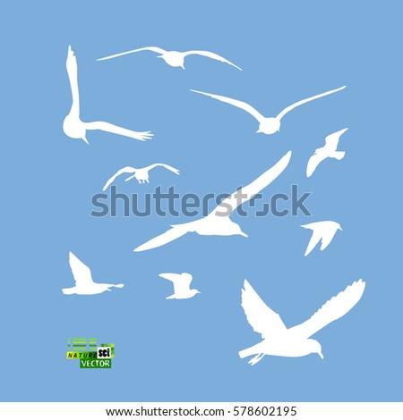set flying seagull vector