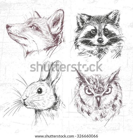 set forest animals  fox  racoon