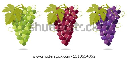 set fresh bunch of grapes