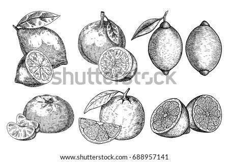 set fresh lemon  orange. hand...
