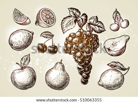 set fruits sketch hand drawn