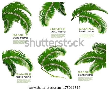 set green branches with leaves