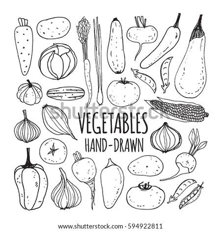 Set hand drawn vegetables. Vector illustration
