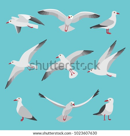 Set illustrations of atlantic seagulls in cartoon style. Pictures of birds in different poses. Seagull bird, wildlife nature animal vector