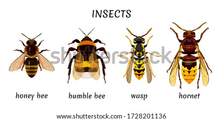 set insects isolated on a white