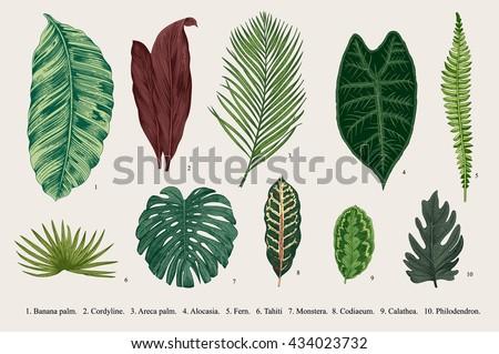 Set Leaf. Exotics. Vintage vector botanical illustration. Colorful.