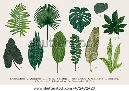 Set Leaf. Exotics. Vintage vector botanical illustration. Colorful. - Shutterstock ID 472492429