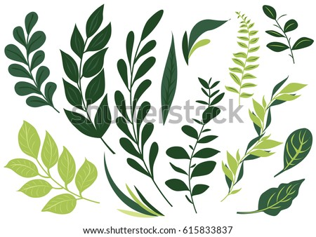 set leaf vector. collection of leaves.