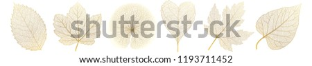 set leaves of gold on white
