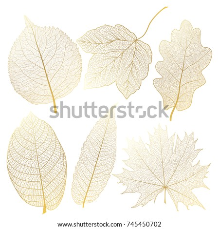 set leaves of gold on white